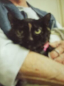 Elvira the cat