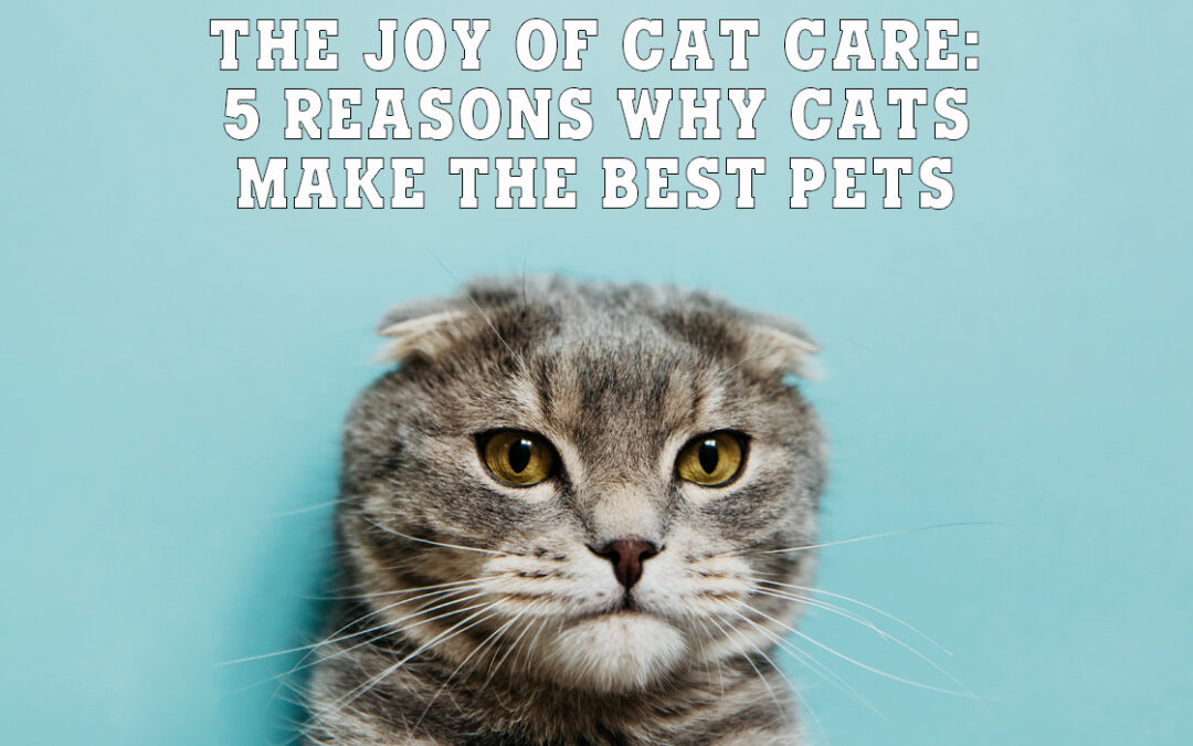The Joy of Cat Care: 5 Reasons Why Cats Make the Best Pets