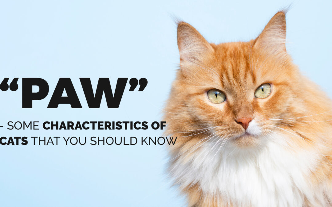 """Paw""-some Characteristics of Cats You Should Know"