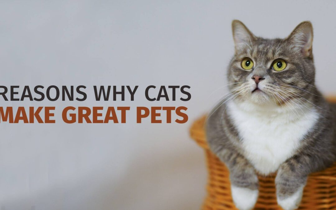 Reasons Why Cats Make Great Pets
