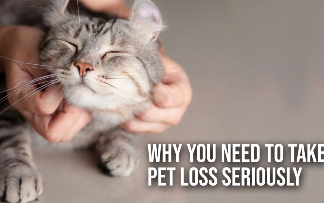 Why You Need to Take Pet Loss Seriously