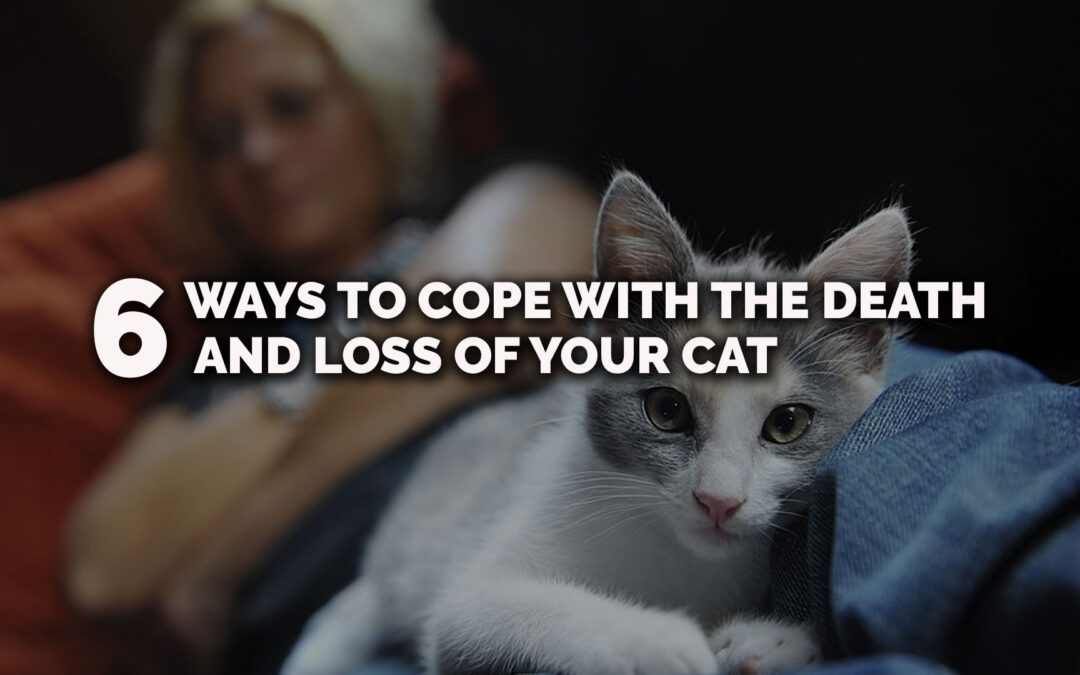Six Ways to Cope With the Death and Loss of Your Cat