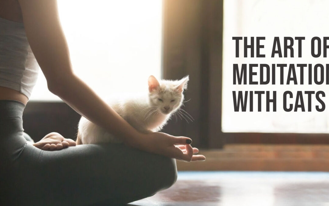 The Art of Meditation with Cats