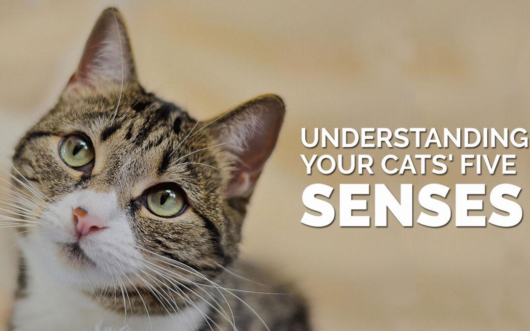 Understanding Your Cats' Five Senses