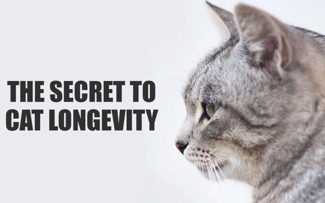 The Secret to Cat Longevity