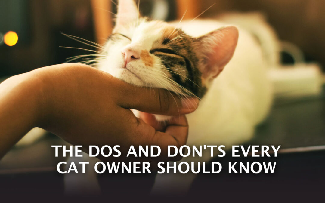 The Dos and Don'ts Every Cat Owner Should Know